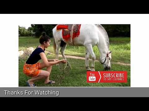 Hot Beautiful girl with Horse [ Horse Training Video