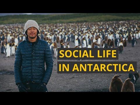 The secret social life of Antarctica