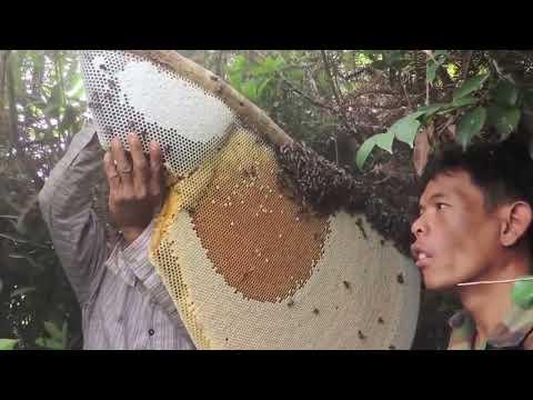 Dünyanın En Doğal Balı!!Yabani Arılardan Korkmuyorlar!!! Kim Sevmez Bu Balı!!!