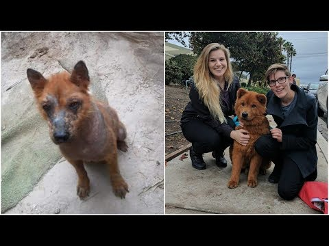 kind hearted woman was pained to see frightened dog suffered from mange she did what she had to do