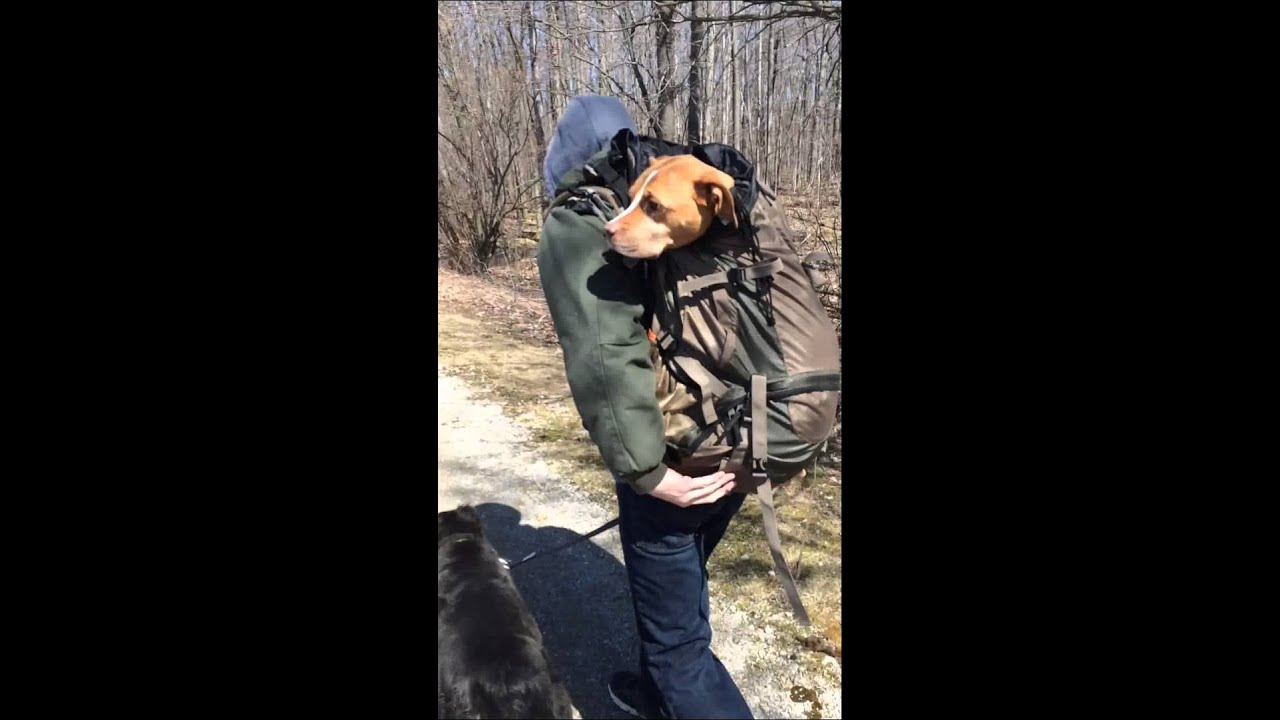 Large Dog Carriers For Hiking