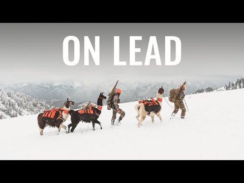 ON LEAD - A Wyoming Rifle Mule Deer Hunt