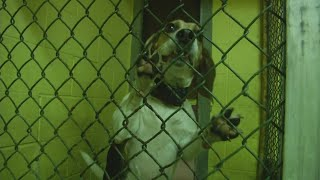 State: Dunkirk animal shelter can be used as temporary holding center