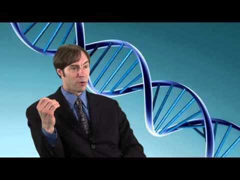 Stephen Meyer on Intelligent Design  What is the origin of digital information found in DNA?