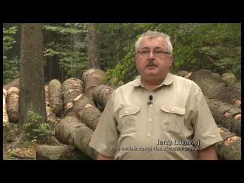 Puszcza Białowieska Niemy Krzyk