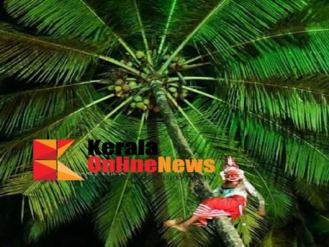 THEYYAM FALL DOWN CLIMBING A COCONUT TREE AT KANNUR