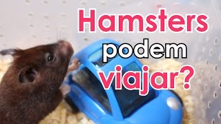 Hamsters podem viajar?