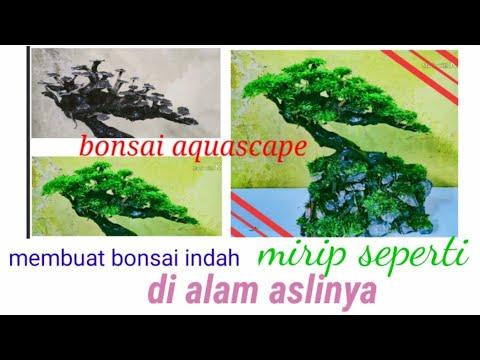 Cara membuat bonsai aquascape yang indah - YouTube