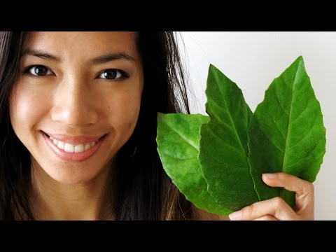 Gynura Procumbens -- vegetable for blood sugar and blood pressure health