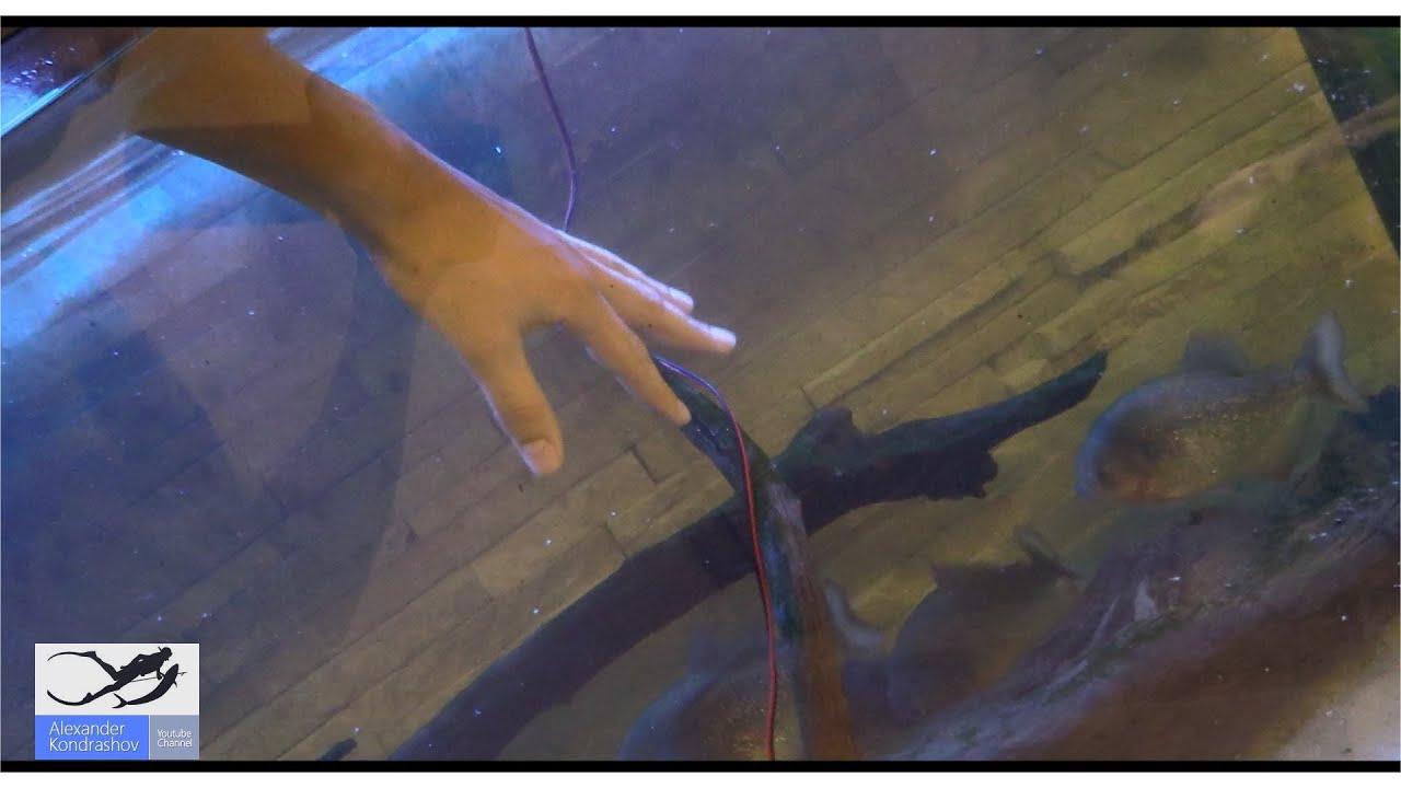 Засунули три руки фото фото 278-183