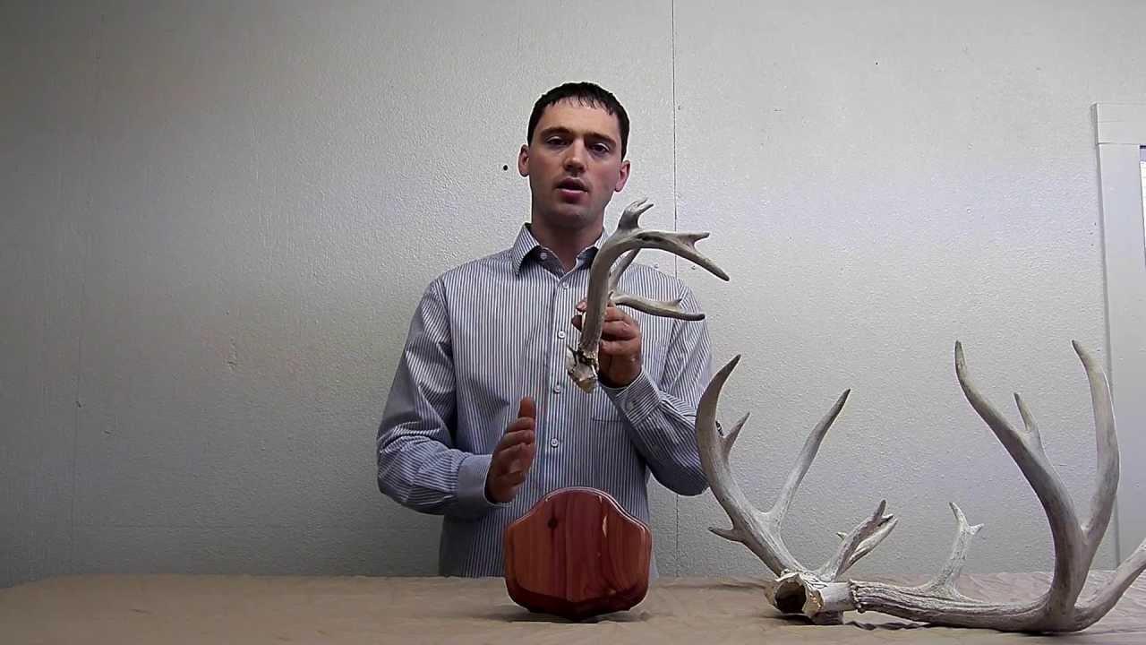 Deer antler mounting kit instructions - The Deer Stand Antler Mounting Kit Video