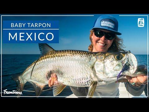 Exhilarating Baby Tarpon Fishing | Campeche Tarpon Bay, Mexico