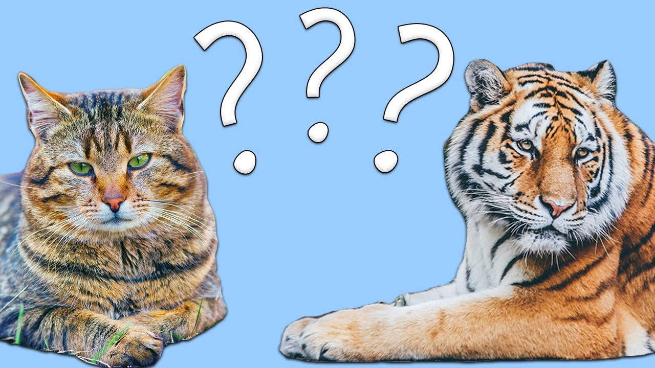 Guess the Animal! Learn the Animals for Kids