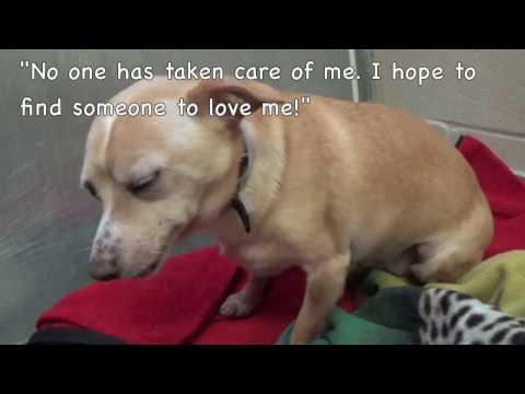 Sweet Little Barney Rubble Needs Rescue Soon! 11 years old
