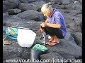 Pesca ao Sargo nos Açores / Fishing White seabream /  Karagöz Balıkçılık  الدنيس الأبيض