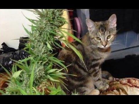 Cannabis documentary 2012 57minиз YouTube · Длительность: 57 мин1 с
