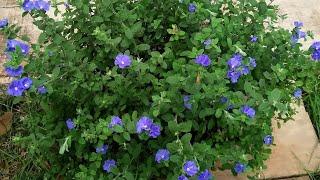 7Plantas Ornamentais  Fáceis d Cultivar