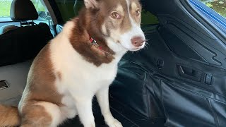 Best Cargo / Pet Liner! Hamilton Pet Liners, Hand Made Full Protection Cargo Liners! Detailed Review
