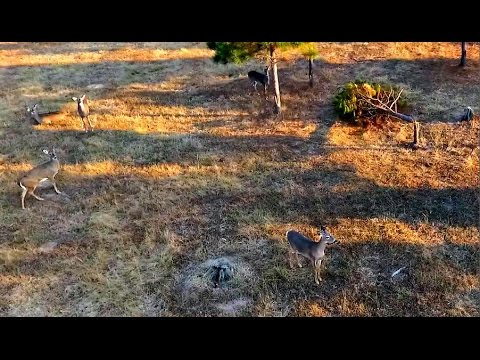Scouting Big Bucks with a Drone