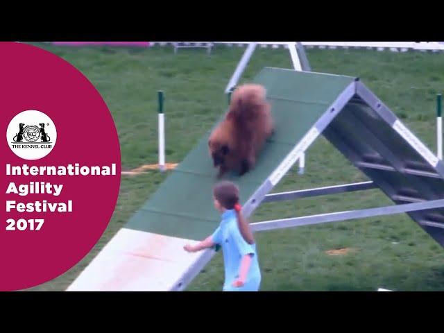 Kennel Club Starters Cup - Small Semi Final | International Agility Festival 2017