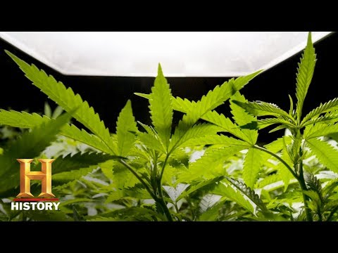 7 Things You Probably Didn't Know About Cannabis | History
