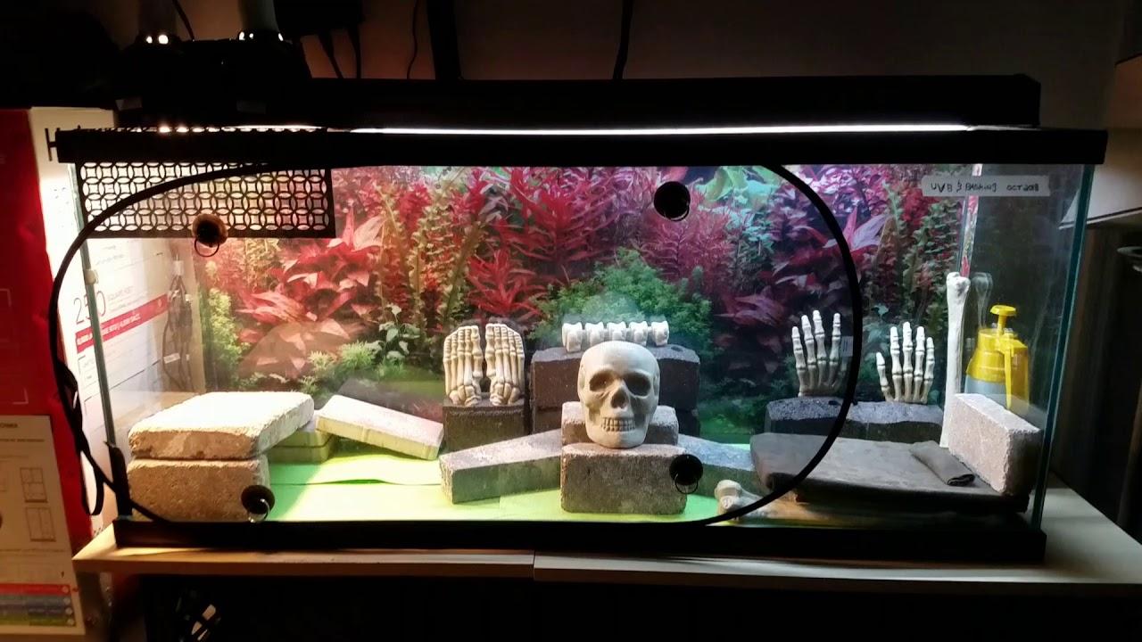 Cheap Bearded Dragon Tank Setup Youtube