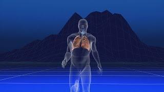 Au coeur des organes : Les modifications physiques à l'effort