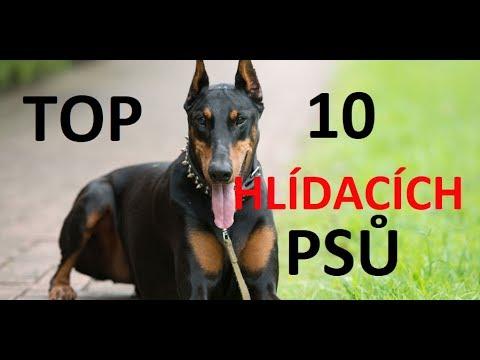 25679c94033 Top 10 nejlepších hlídacích psů - YouTube