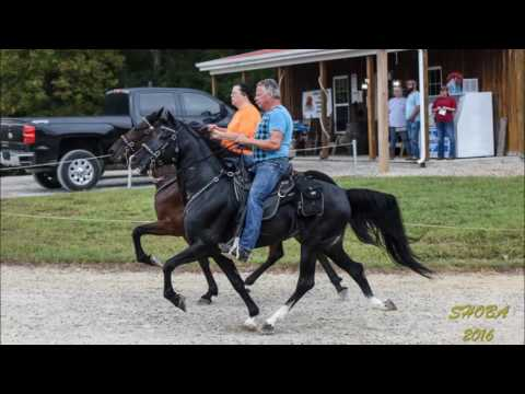 SHOBA 2016 Fall Trail Ride