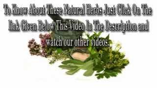 Mouth Herpes   Herpes On Mouth - Treatment And Remedies !