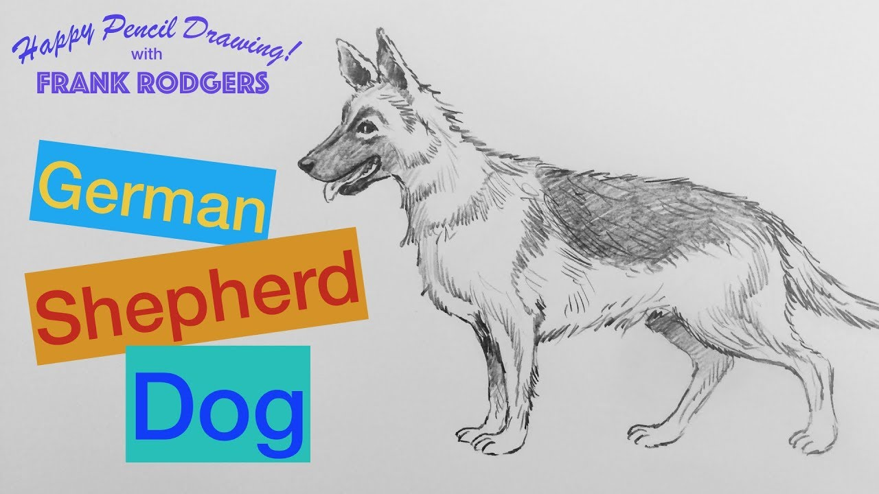 How to draw a pencil sketch of a german shepherd dog happy drawing with frank rodgers