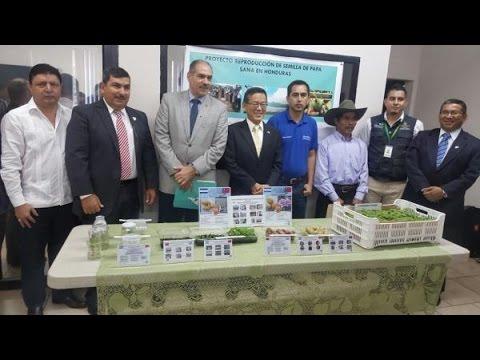 Con apoyo de Taiwán SAG promueve producción de semilla de papa para reducir costos de importación