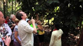 Diamond Conference GOA - Spice Plantation Tour