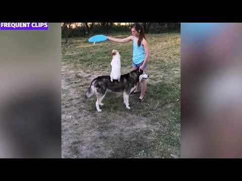 Funniest Dog Videos 2020 (Part 4) Funny Dog Compilation
