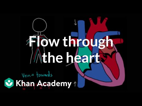 Flow through the heart | Circulatory system physiology | NCLEX-RN | Khan Academy
