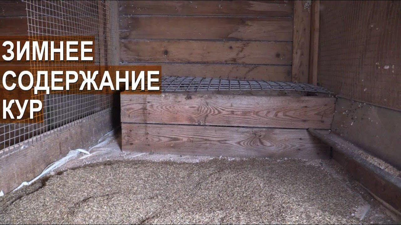 Зимний курятник. Содержание кур зимой. Птицеводческое хозяйство Золотухиных