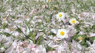 Maledetta Primavera : Loretta Goggi