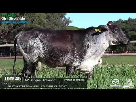 LOTE 45 - GOTILA FIV MERIDIAN CABEC. DO PRATA - SELL0101 - 4369-AV