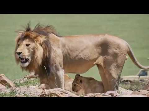 Серенгети парк   сердце Африки - фото
