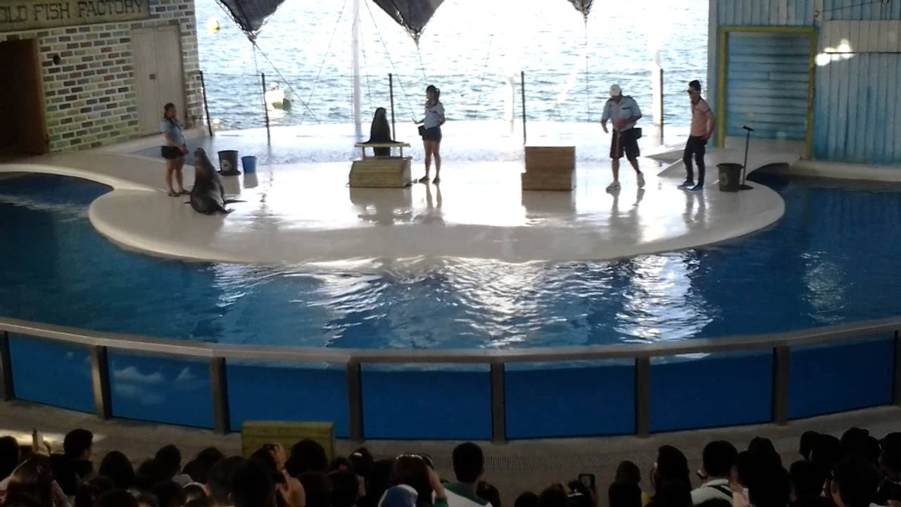 Sealion Show3 at Ocean Adventure Park Subic - YouTube