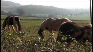 "Part 1- Week In Week Out, ""My Big Fat Gypsy Horse Problem"" Feb 2012. Part 1.  VTS_01_1.VOB"