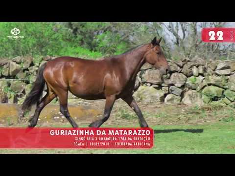 Lote 24 - Guriazinha da Matarazzo