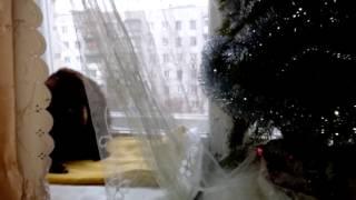 Зеленые глаза кошечки Эклер и зеленая ёлочка)))