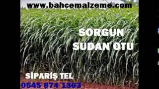 sorgun sudan otu tohumu yetiştiriciliği, sorgun sudan otu ekim zamanı, sorgun sudan otu tohumu ankar