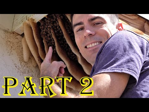 Dangerous & Funny Animals! - Bee Hive High Five & Racing Rattle Snakes! Herping, Nature, Fish, 4K