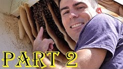 Bee Hive High Five!  -Funny nature & fun Travel. Snake & bugs West US