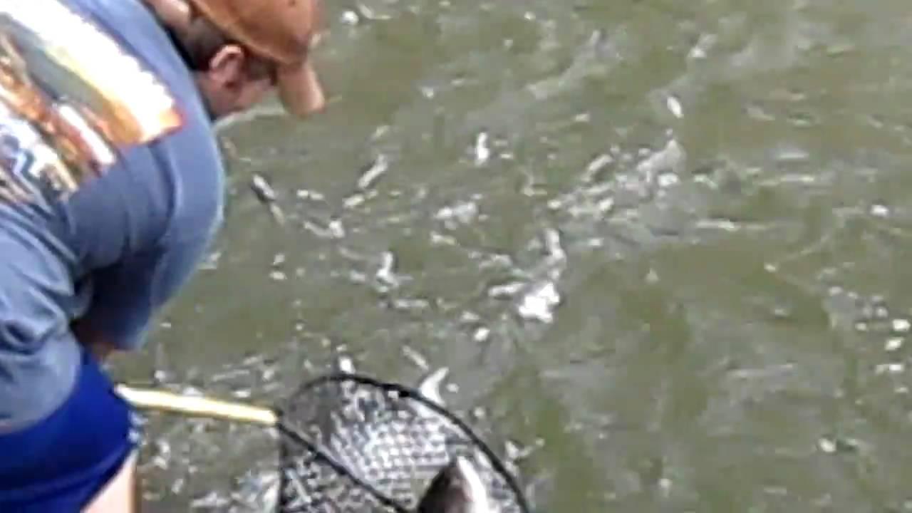 Striper fishing below pickwick dam tennessee mvi 0118 mov for Pickwick fishing report