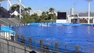 Танец дельфинов.MOV
