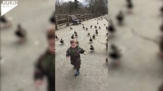Toddler Leads Duck Army