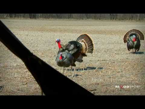 Bow Hunting Excitement: Big Nebraska Gobblers
